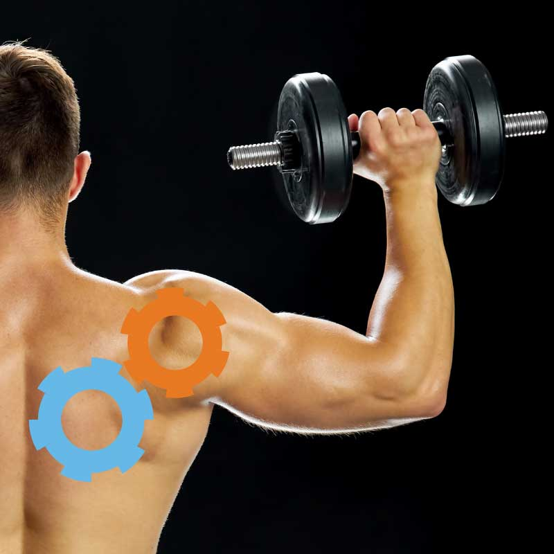 guide to shoulder pain | Arana Hills Physiotherapy